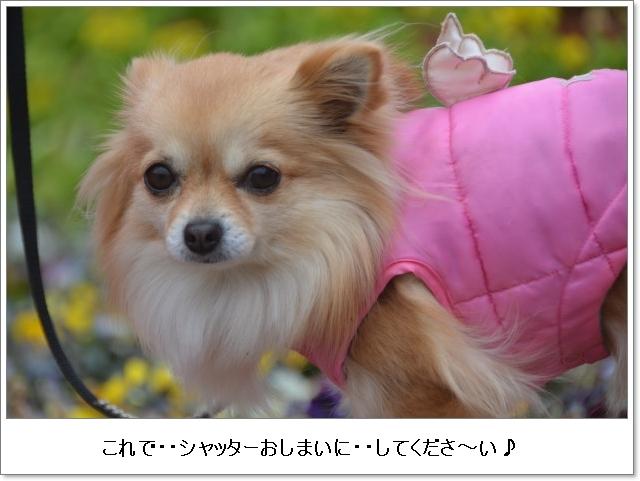 DSC_9833_01.jpg