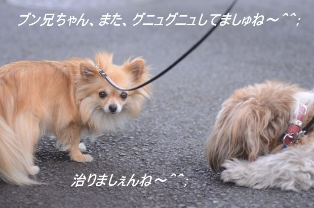 DSC_9942_01.jpg