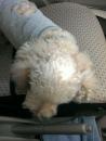 車の中で寝る