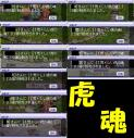 2010-04-20売れた虎の魂達
