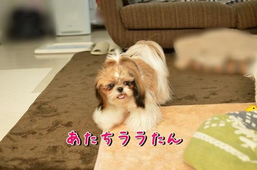DSC_0031_20140109145305c1c.jpg