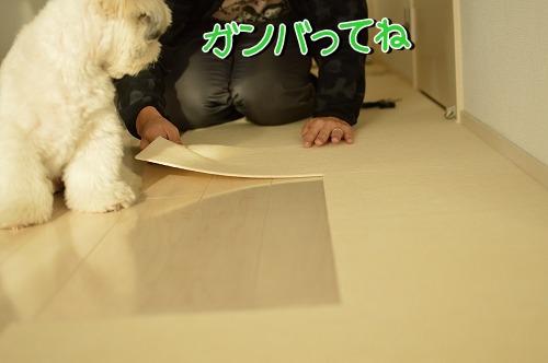 DSC_0113_20131204212409e9f.jpg