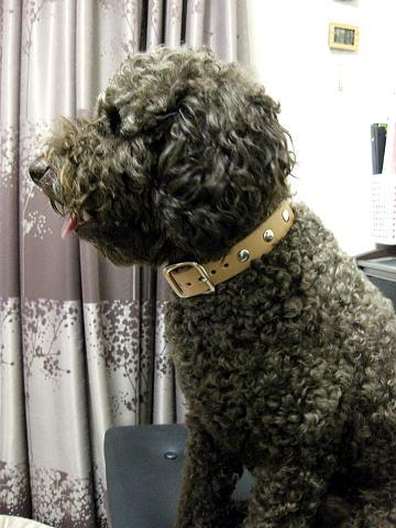 茶太郎(弟犬)
