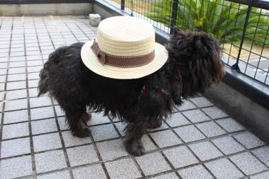 01カンカン帽