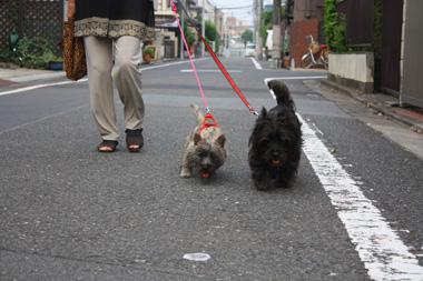 12ばあ散歩