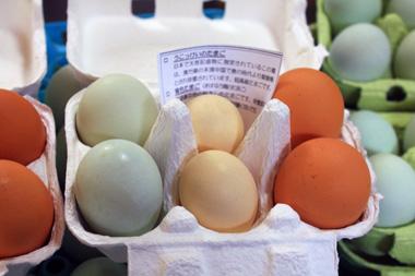 ・02卵 のコピー