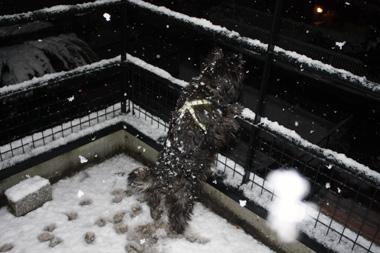☆03雪 のコピー