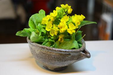 10菜の花 のコピー