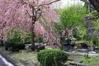 01-01桜 のコピー