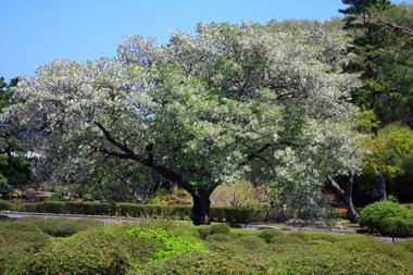 13木 のコピー