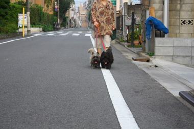 01散歩 のコピー