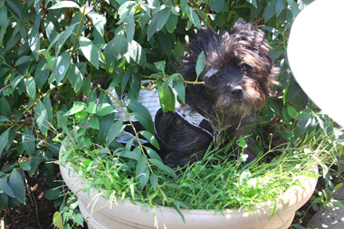 13鉢犬 のコピー