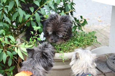 23-3鉢犬 のコピー