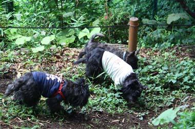 06◎14黒犬隊 のコピー