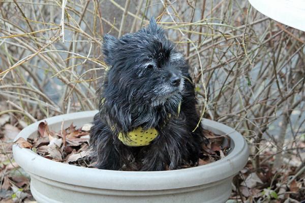 14鉢犬 のコピー