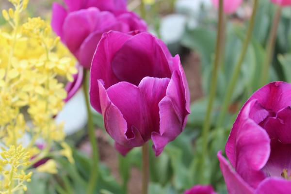 03 花 のコピー