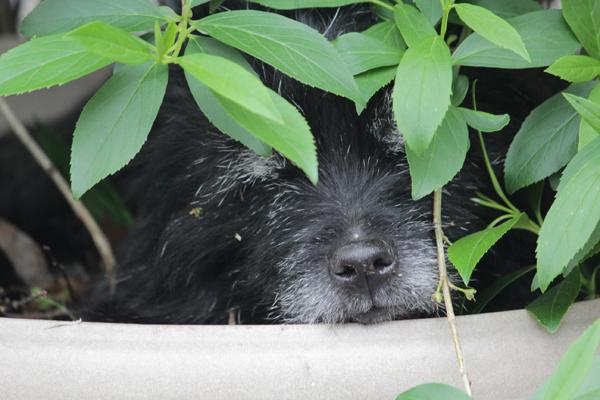 06鉢犬 のコピー