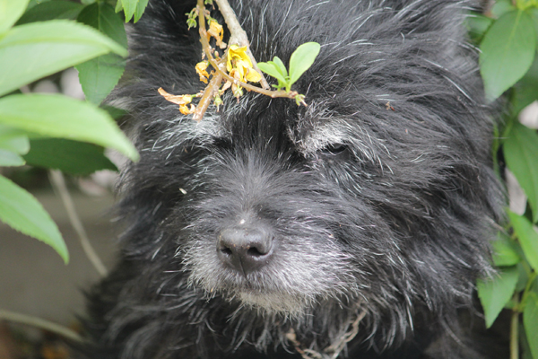 07鉢犬 のコピー