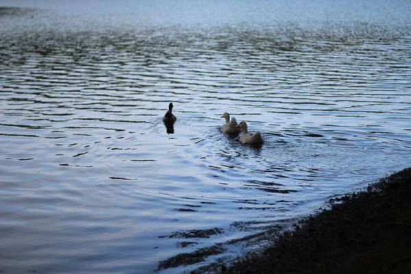 06一碧湖