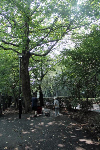 06木陰 のコピー