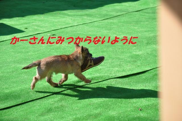 DSC_0820_convert_20140123235013.jpg