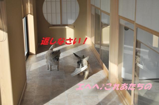 DSC_0832_convert_20140126195334.jpg