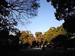 Image498.jpg