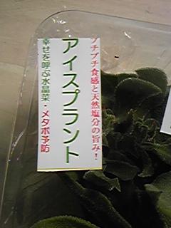 Image727_1.jpg