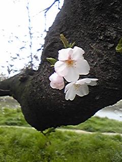 Image880.jpg