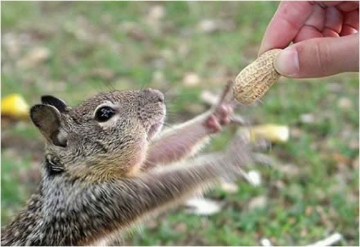 リス(Esquilo)