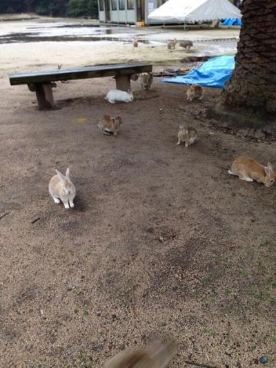 ウサギ島_convert_20141113213612