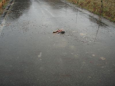 2010.02.11カルガモ