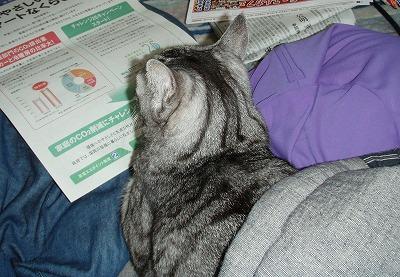 2010.04.21新聞を読むネコ