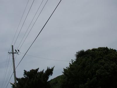 2010.07.25新発見3