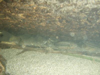 2010.08.18岩の下2