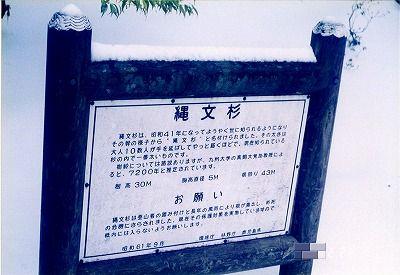 2010.09縄文杉3