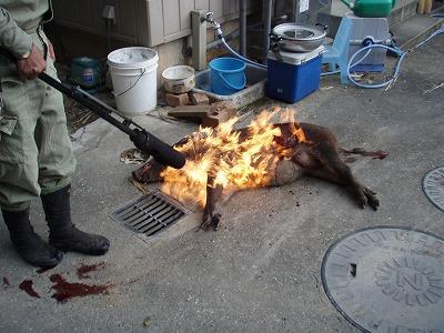 2010.09.26イノシシの丸焼き2