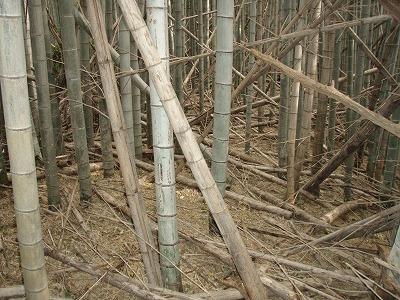 2011.02.24風倒木