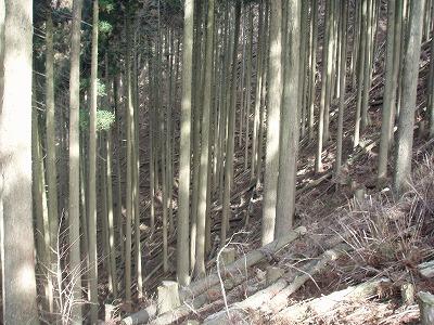 2011.02.27鹿撃ち遠征3
