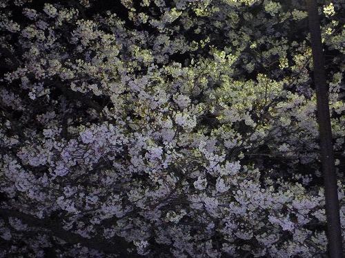2011.04.11花見2