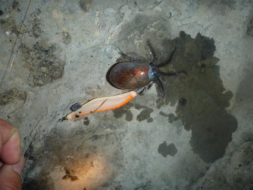 2011.04.18コウイカ釣り6
