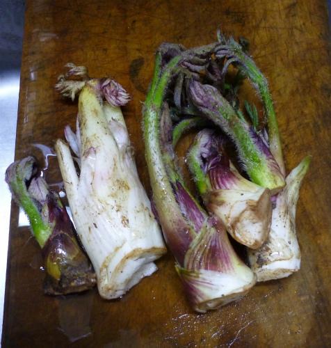 2011.04.19山菜6