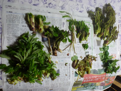 2011.05.04山菜留学6