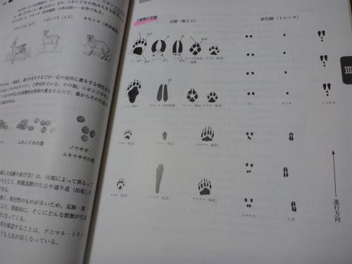 2011.06.13罠2