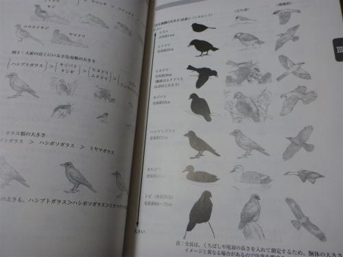 2011.06.13罠3