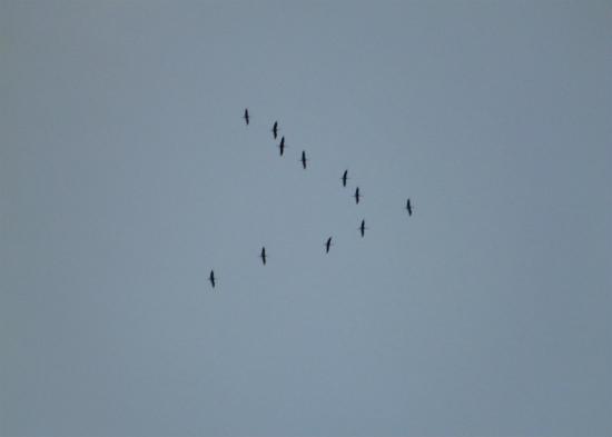 2011.11.08鶴