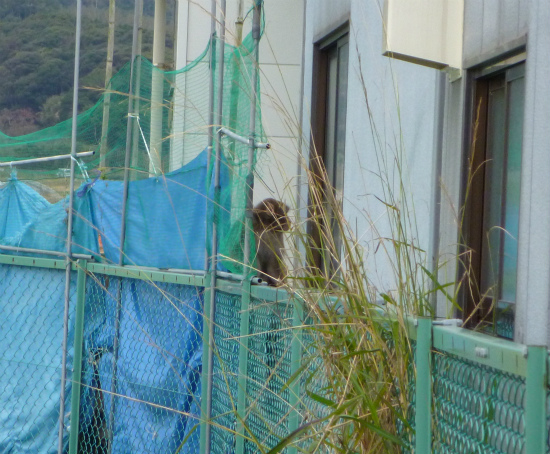 2011.12.12猿1