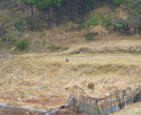 2012.02.11猿