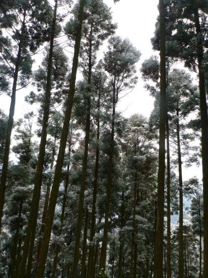2012.02.19雪中行軍6