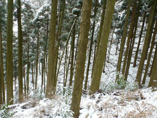 2012.02.19雪中行軍4